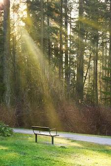 日当たりの良い光の下で木が緑豊かな公園の道のベンチ