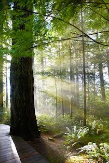 Зеленый лес на рассвете