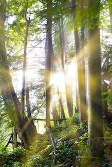 日の出の緑の森