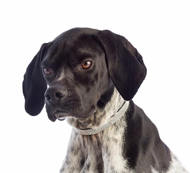 ラインストーン付きネックレス付きの黒と白の狩猟犬