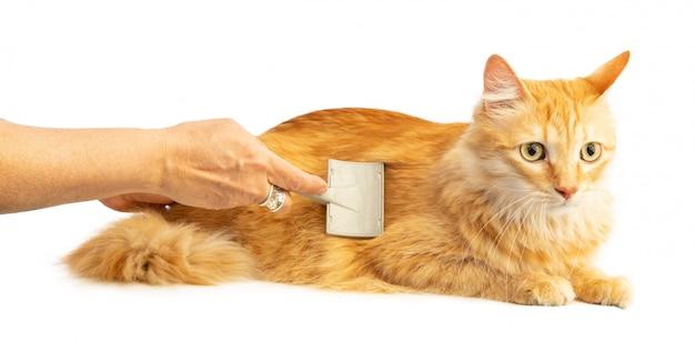 Рыжий кот чистится