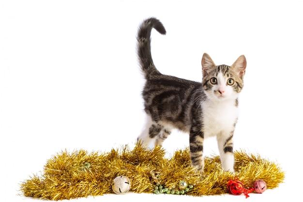 クリスマスの花輪と子猫