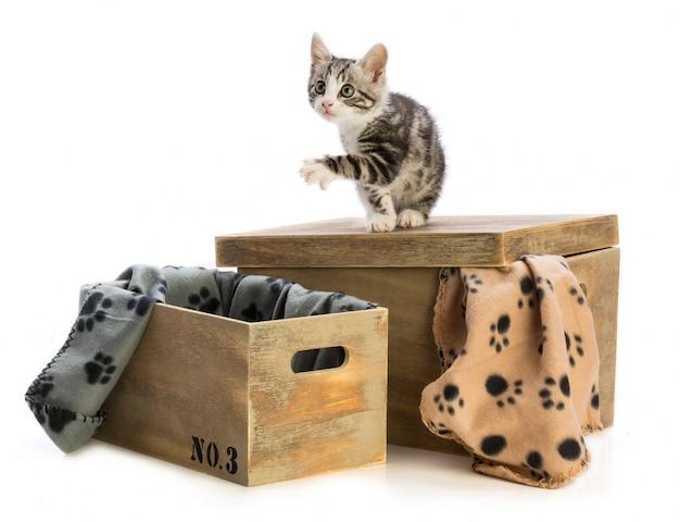 いくつかの木箱を持つ猫