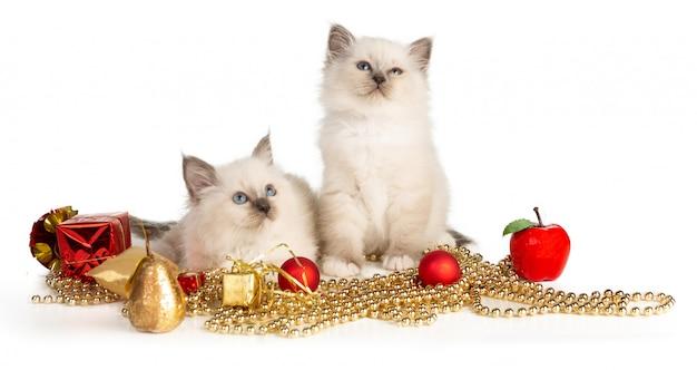 Священный котенок бирмы с рождественским декором