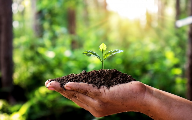 人の手にコインと自然の緑を植えてください。