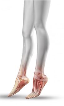 部分的な筋肉マップで女性の足のクローズアップ