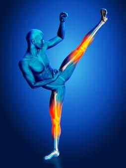 脚の解剖学