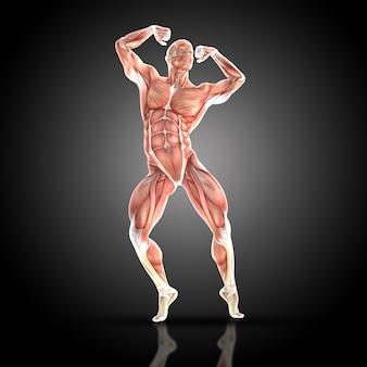 筋肉男は彼の筋肉を使ってポーズ