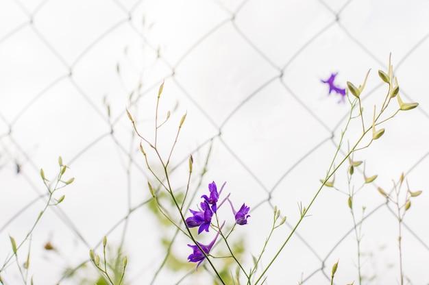グリッドの背景に青い花と緑。