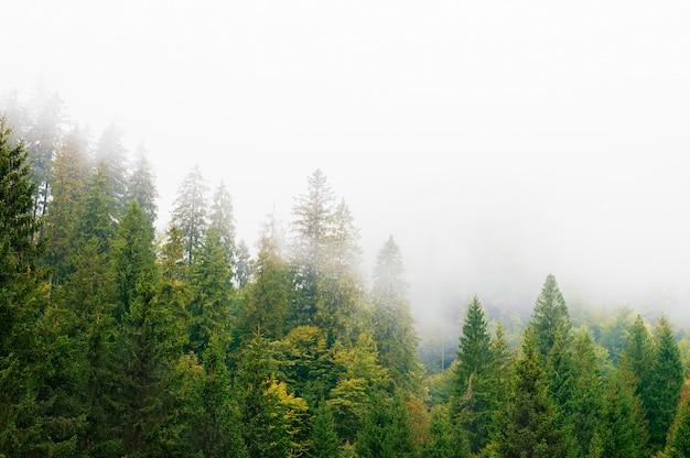 山の斜面、森林、丘、朝の霧