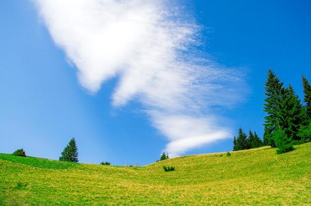 緑の牧草地は背景の青い空で食べた