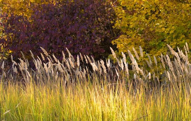 Осенние стебли сухой травы