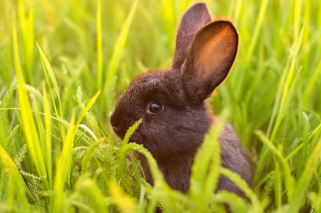 草の中の小さなウサギ