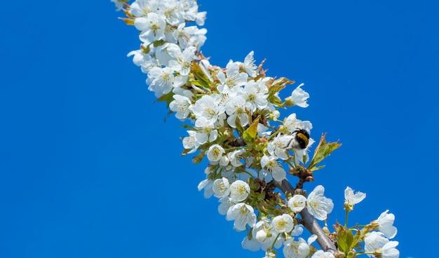 空に対して小さな白い花