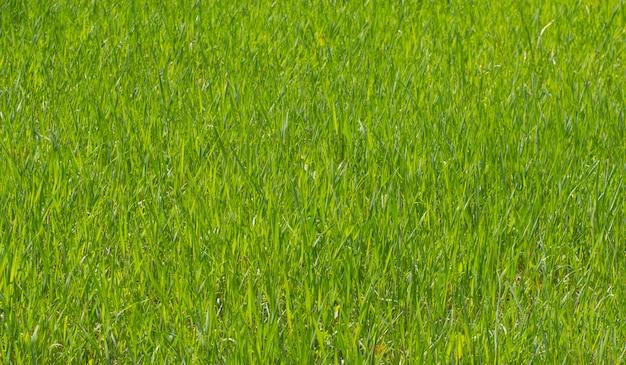 テクスチャ背景緑の植物