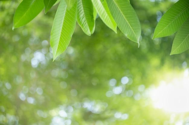 自然は、ボケ味とコピースペースで日光の下でぼやけて緑の背景に緑の葉を表示します。