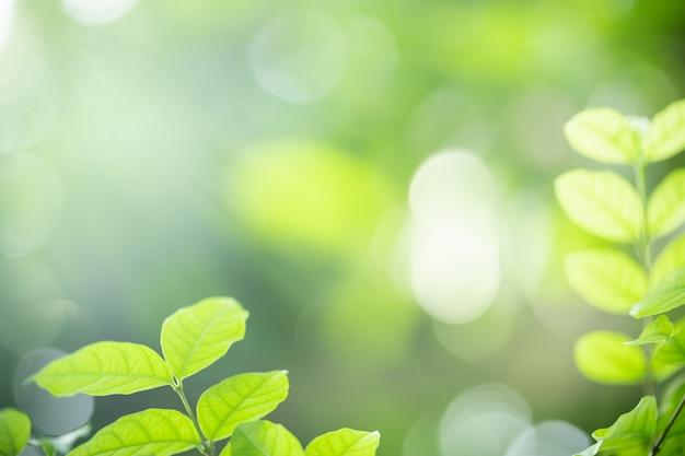 日光の下でぼやけた緑の自然の緑の葉のクローズアップ。