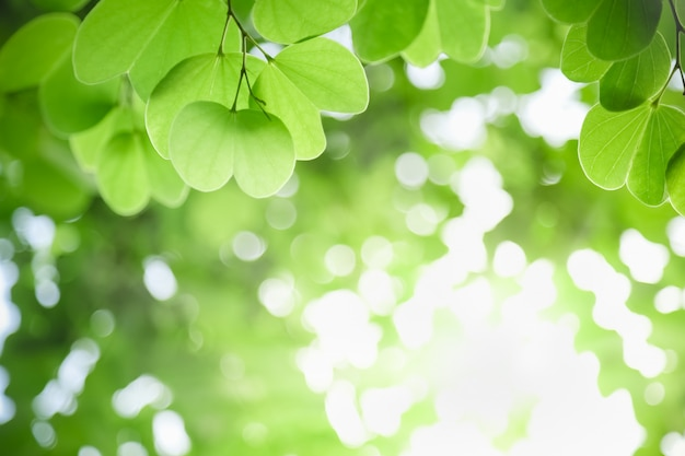 Крупным планом вид природы зеленых листьев на затуманенное зелени