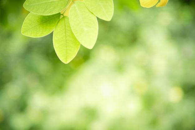 ボケとコピースペースと日光の下でぼやけた緑の背景に自然ビューの緑の葉のクローズアップ。