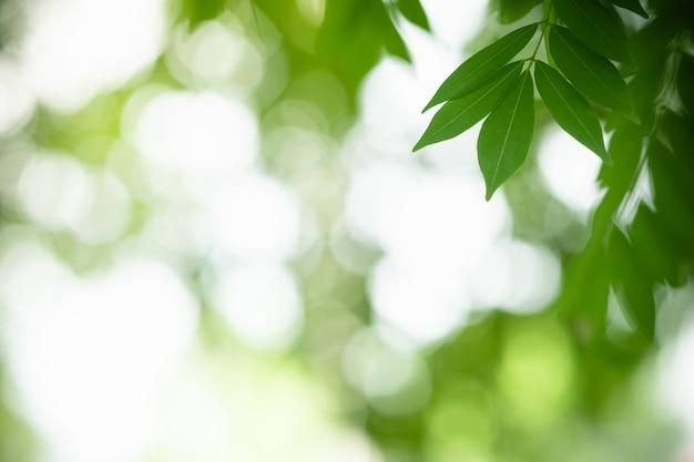 Крупным планом вид природы зеленых листьев на фоне затуманенное зелени под солнечным светом
