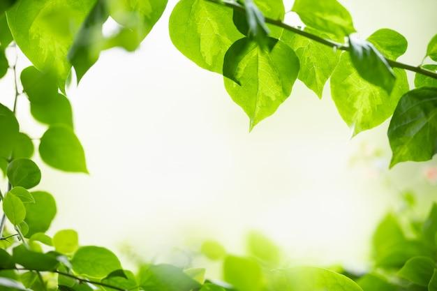 ボケ味を持つ日光の下でぼやけた緑の背景に自然ビューの緑の葉のクローズアップと背景として自然の植物の風景を使用してスペースをコピーします。