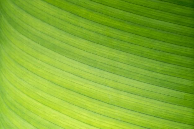 Природа вид зеленых банановых листьев и текстуры под солнечным светом