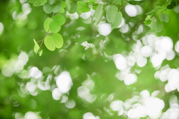 Взгляд зеленых лист на запачканной предпосылке растительности в саде с космосом экземпляра.