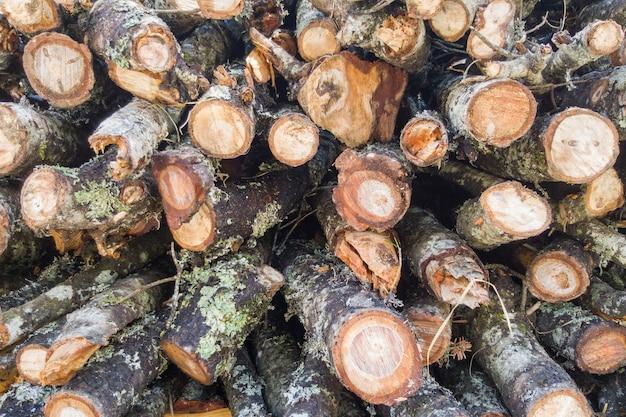 冬の枝を切る