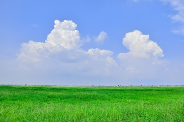 テクスチャまたはデザインの風景緑のフィールドと青空の背景