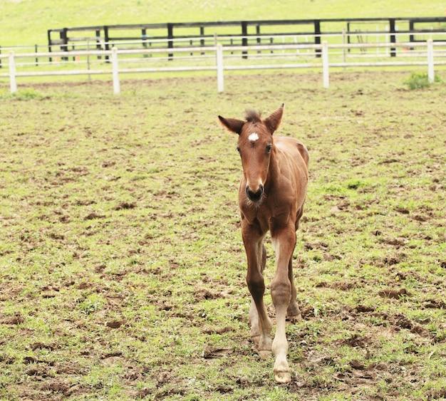 若い子馬は牧草地で彼の最初のステップを持っています