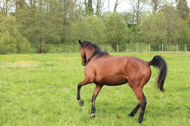春の牧草地でギャロッピングの馬