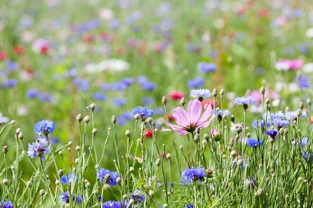 花の牧草地