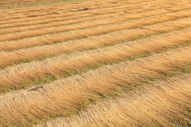 亜麻の分野は床に線を描いた