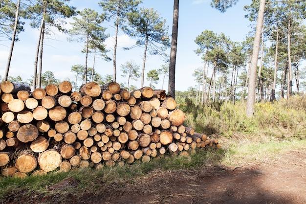 松の木の幹カットの山