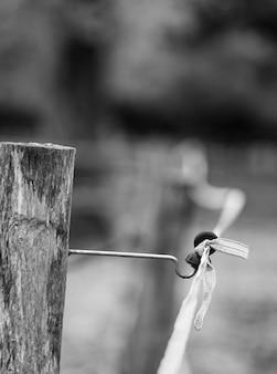 白と黒の馬の電気柵の詳細