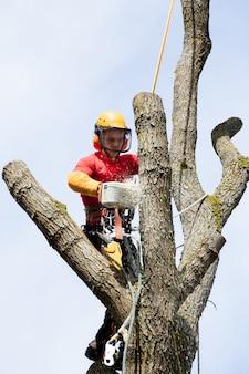 Лесоруб рубит дерево бензопилой