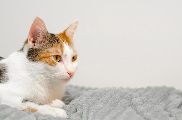 Трехцветный кот засыпает на кровати, серый плед.