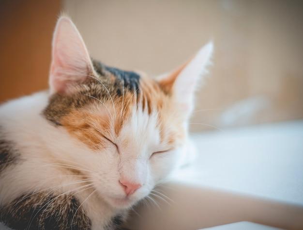 眠っている三色猫。かわいい子猫。写真。