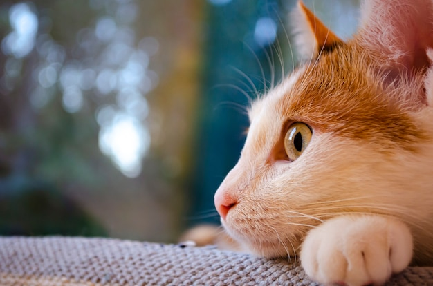 Домашняя кошка лежит возле окна.