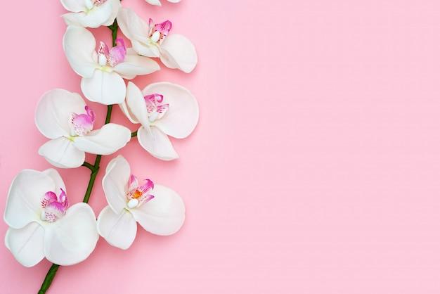 ピンクの背景、テキスト用のスペース、フラットに蘭の花を置きます。