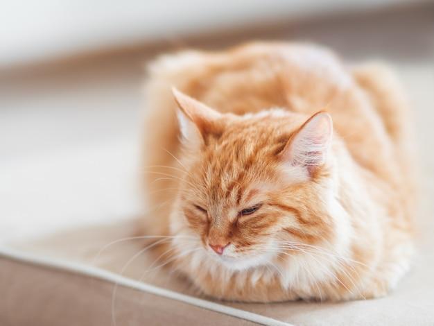Милый рыжий кот, лежа на диване.