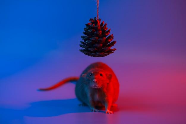 今年の装飾的なラットのシンボルと青いネオンの光でクリスマスツリーの円錐形