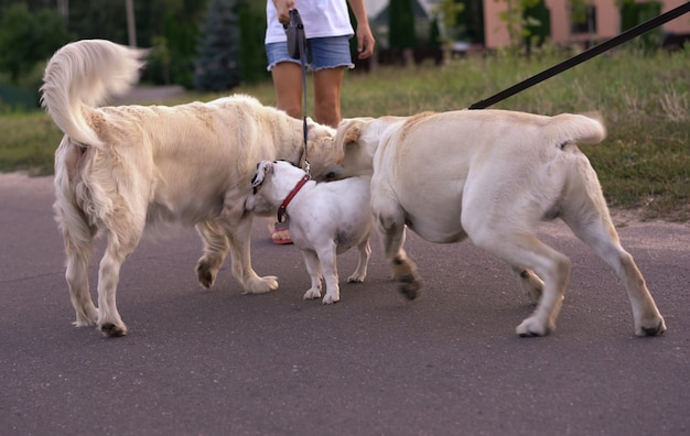 Встреча двух собак на прогулке в парке