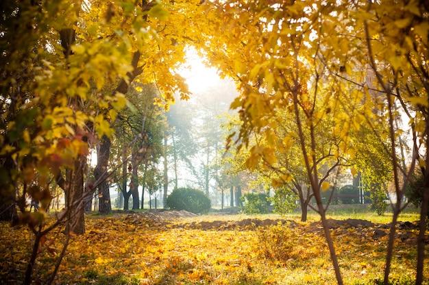 公園の紅葉の背景