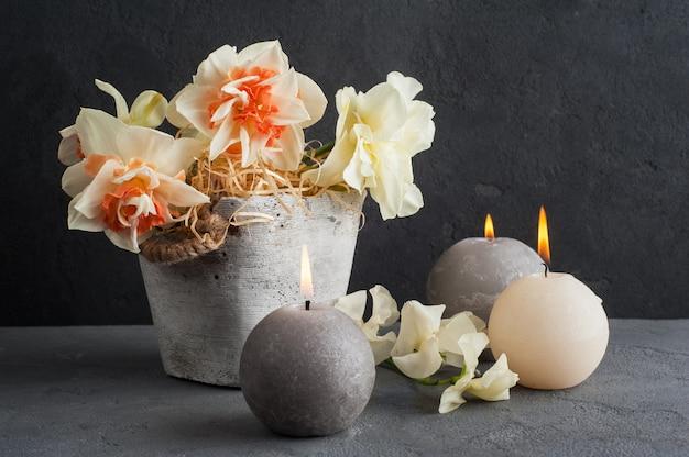 Нарциссы в цветочном горшке на темном бетоне