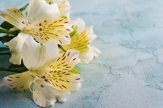 青色の背景にアルストロメリアの花