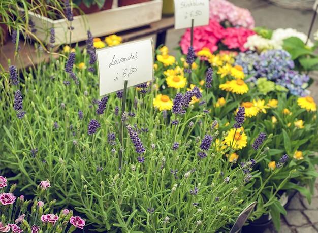 Цветы лаванды на клумбе в магазине