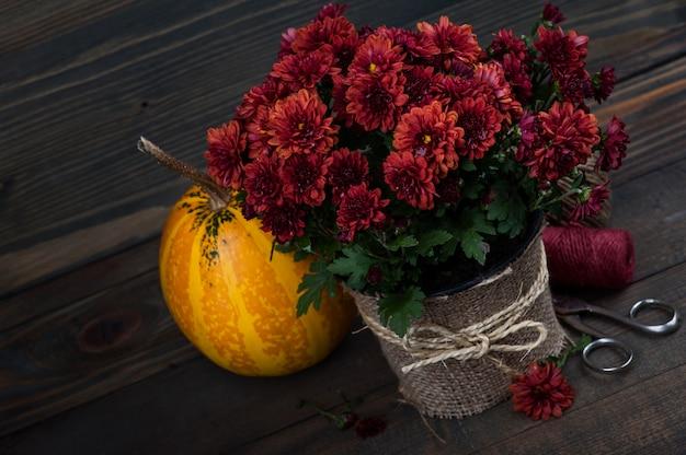 Горшок с красными цветами хризантемы