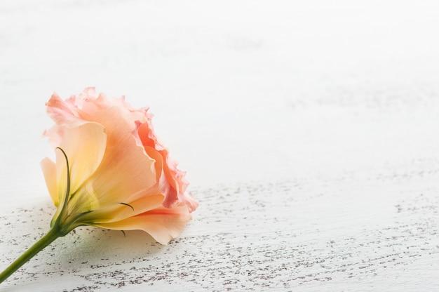 Желтая розовая эустома цветок крупным планом фон
