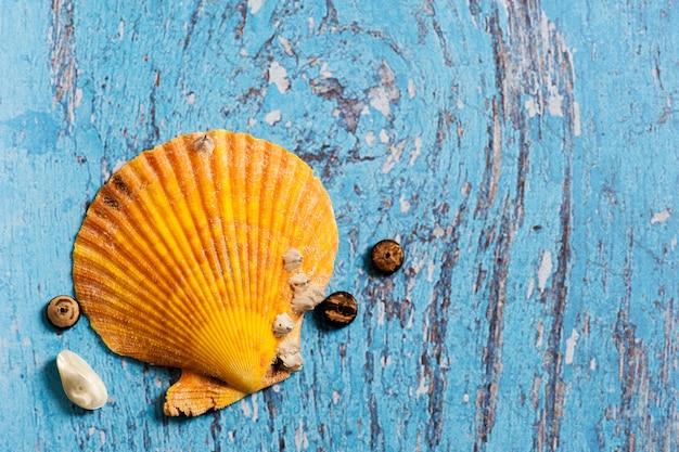 青い木製のテーブルに大きなオレンジ色の貝殻